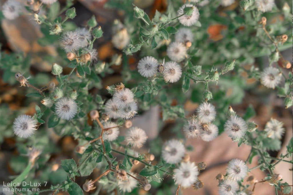 รีวิวภาพถ่ายธรรมชาติ กล้อง Leica D-Lux 7 ไฟล์ RAW