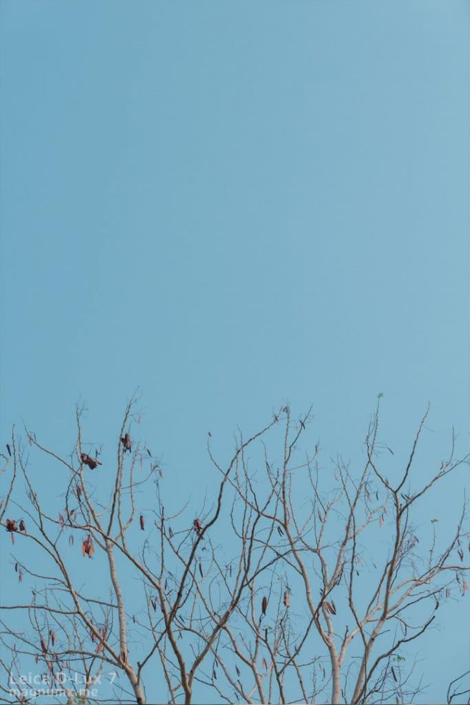 รีวิวภาพถ่ายดอกไม้ กล้อง Leica D-Lux 7 ไฟล์ RAW