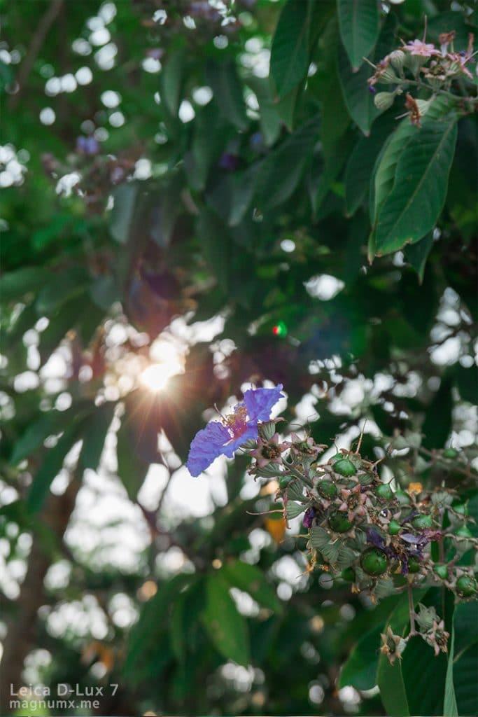 รีวิวภาพถ่าย กล้อง Leica D-Lux 7 ไฟล์ RAW